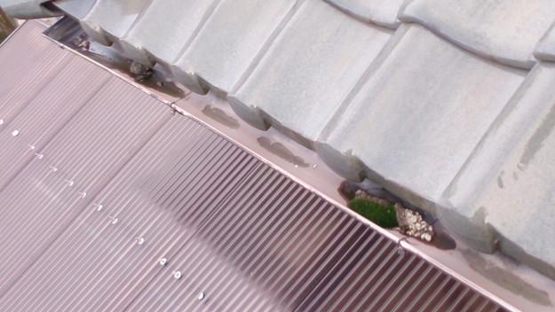 屋根修理工事前雨樋ゴミつまりコケ発生DSC_0448